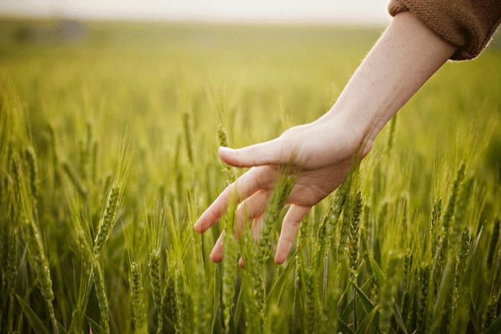 Nuovi orizzonti per l'agricoltura di precisione in Campania