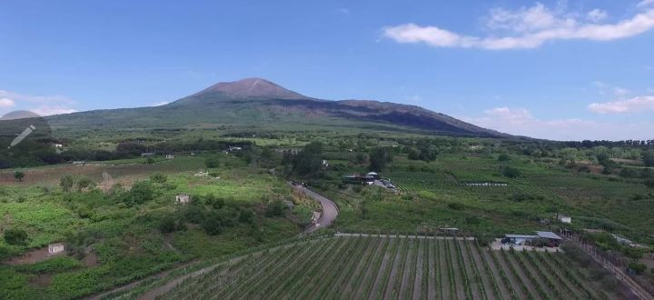 """Confagricoltura Campania: """"Ad Agricoltura100 premiata l'azienda Sorrentino Vini, esempio di sostenibilità ambientale e qualità"""""""