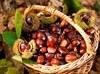 La coltivazione del castagneto da frutto liberata dalle compensazioni ambientali, una vittoria di Confagricoltura