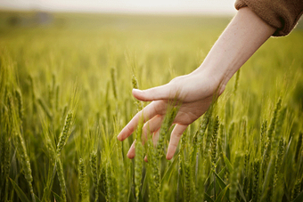 COVID 19 - Confagricoltura chiede al Governo ristori alla filiera agroalimentare