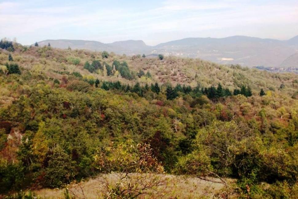 """Distretti Agroalimentari di qualità e Distretti rurali: """"Un'occasione colta a metà"""""""