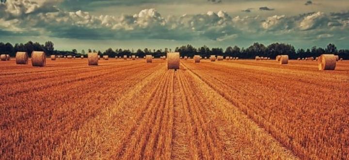 Campania prima regione per imprese agricole aderenti a contratti di rete