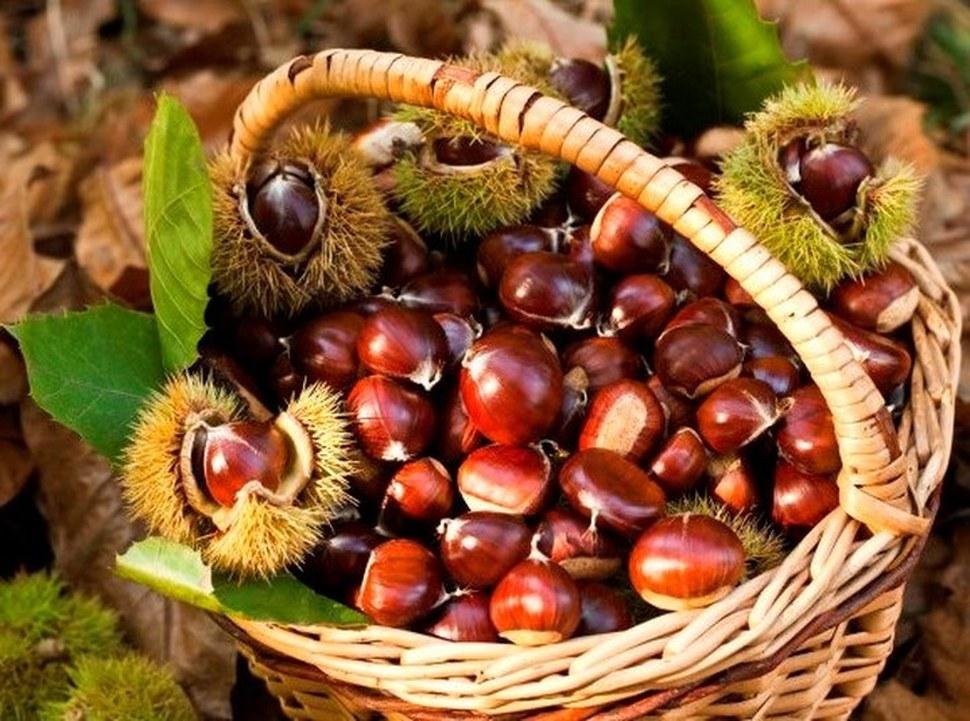 Riconosciuta la valenza ambientale del castagneto da frutto